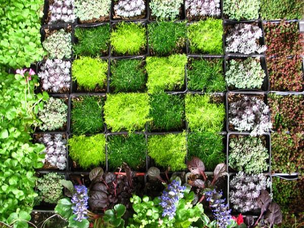 vertical-wall-garden-600x450